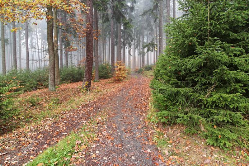 Forest path in the autumn forest royalty free stock photography
