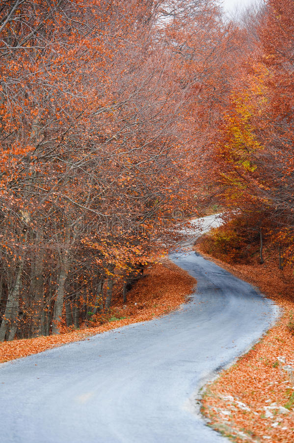 Download Forest Path At Autumn Season Stock Photo - Image: 27919072