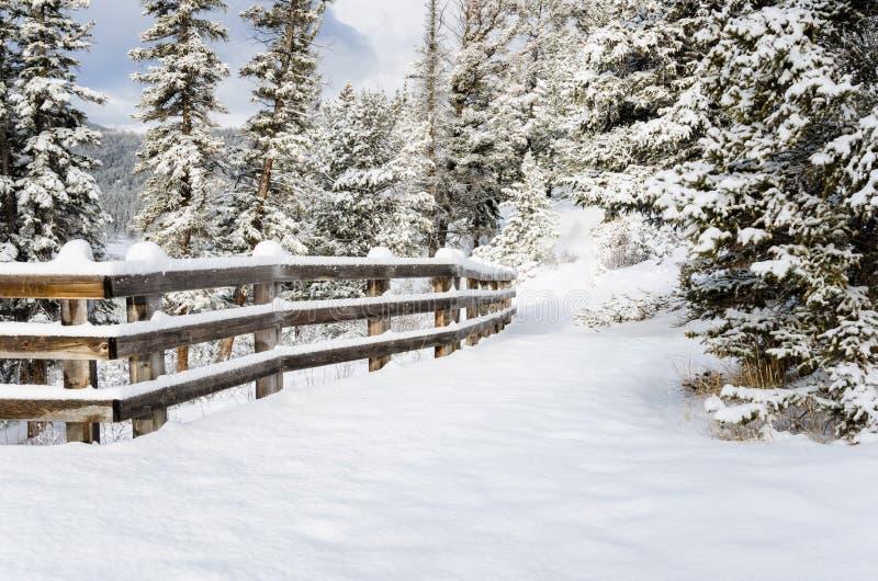Forest Path Covered en nieve fresca en Sunny Winter Day foto de archivo