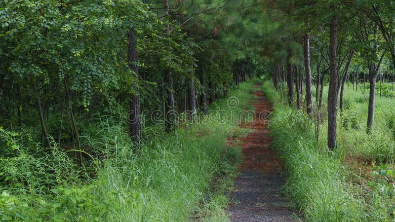 Quiet path through the forest stock images
