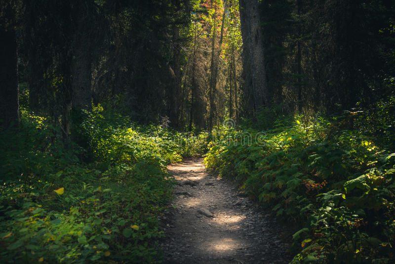 Forest path dappled with sunlight. royalty free stock image