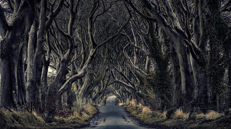 Forest path dark hedges. Path through the dark hedges royalty free stock photo