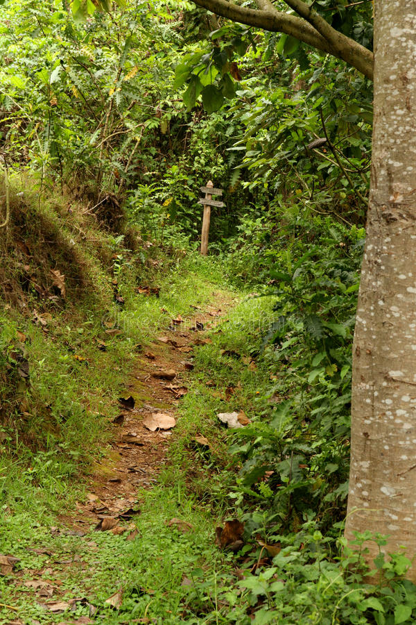 Forest Path with Direction Sign at End royalty free stock photography