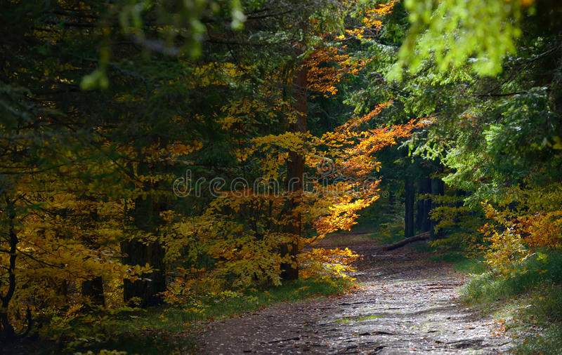 Forest Path escondido fotografia de stock royalty free