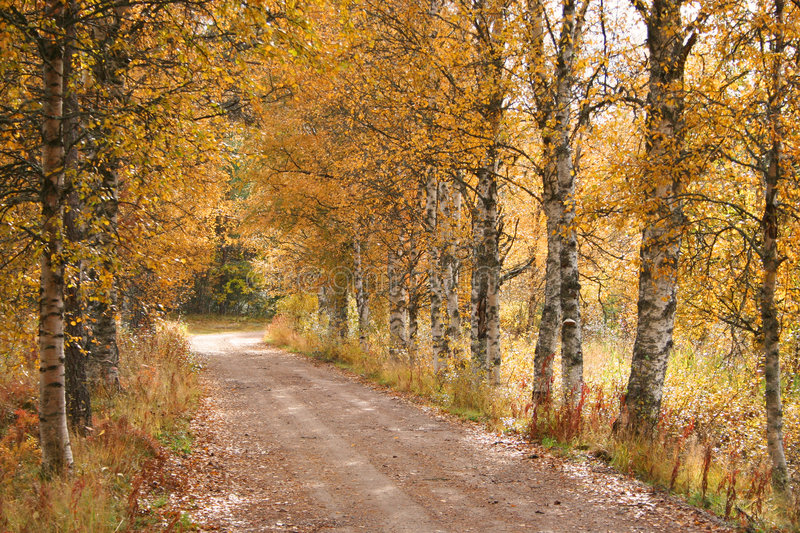 Forest path during fall royalty free stock photography