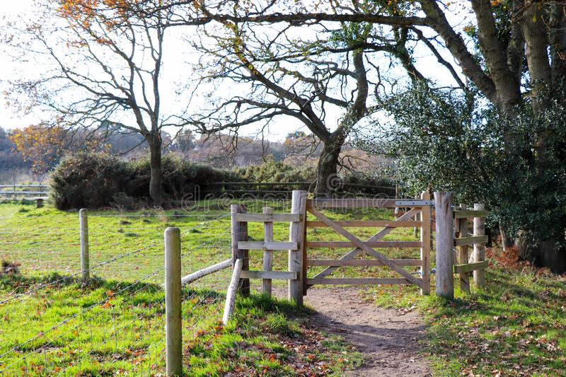 Forest Path Gate royalty free stock photo
