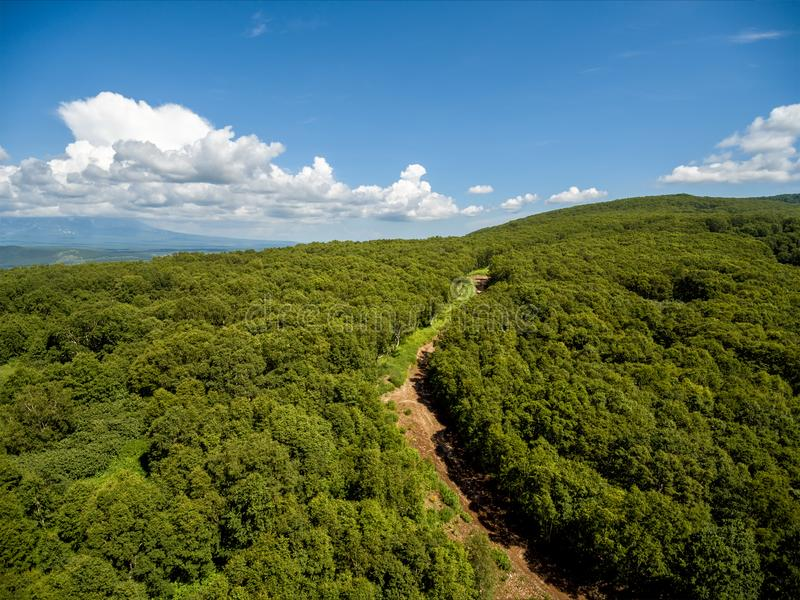 Forest path in sunny day aerial shot. Forest path in hot sunny day aerial shot royalty free stock photography