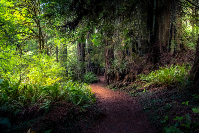 Forest path. royalty free stock photography