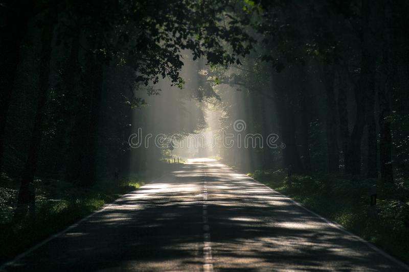 Forest, Path, Infrastructure, Woodland stock photography