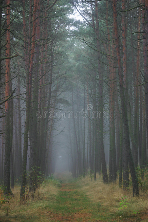 Download Forest Path, Lithuania stock photo. Image of path, eastern - 187938