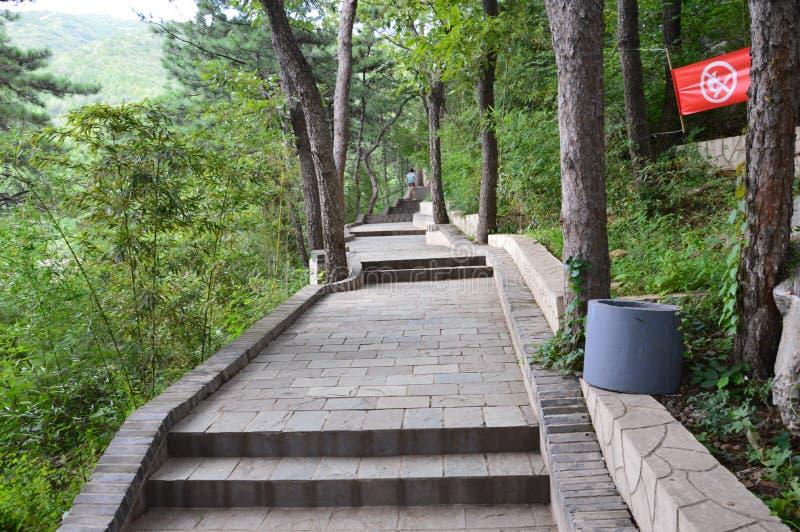 Forest Path mágico fotos de stock royalty free