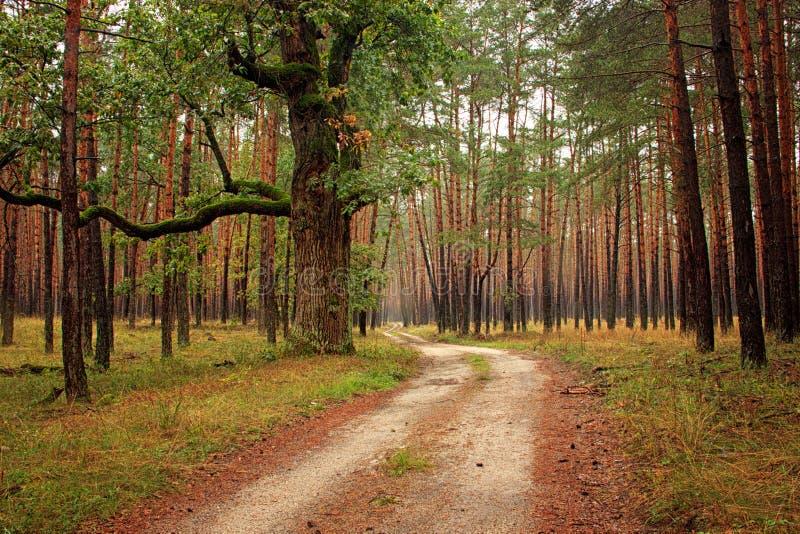 Forest Path Through Magic Forest lizenzfreies stockfoto