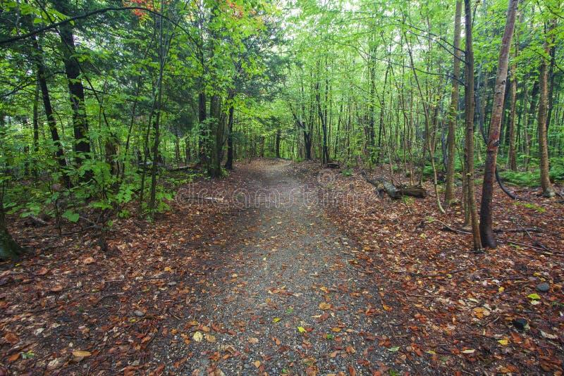 Forest Path mit gefallenen Blättern in Neu-England lizenzfreie stockfotos