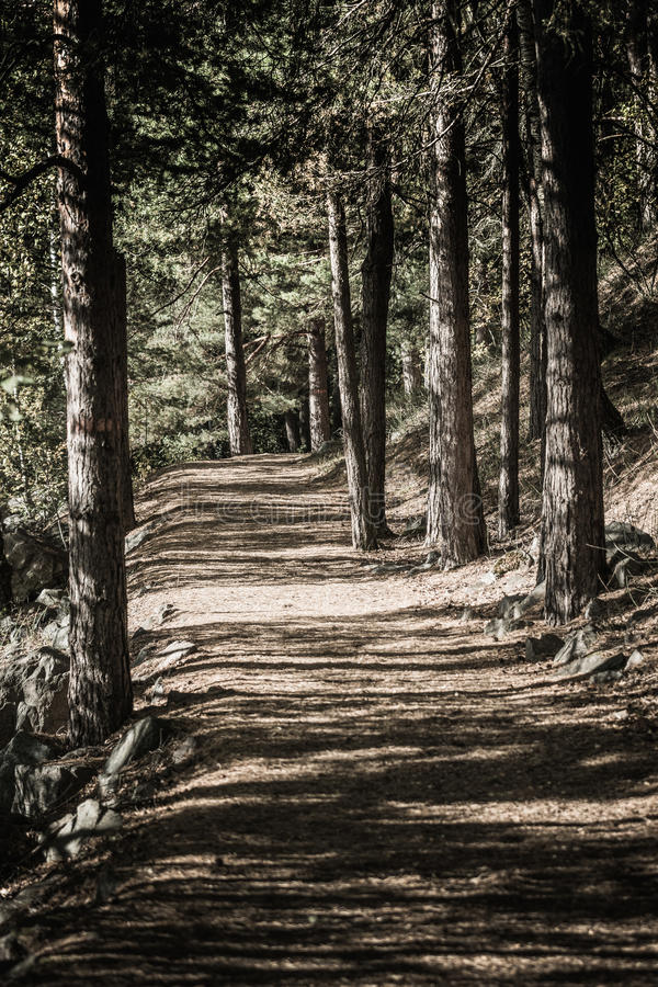 Forest path. Mystic walking path through a deep pine wood, with pine needles on the ground stock images