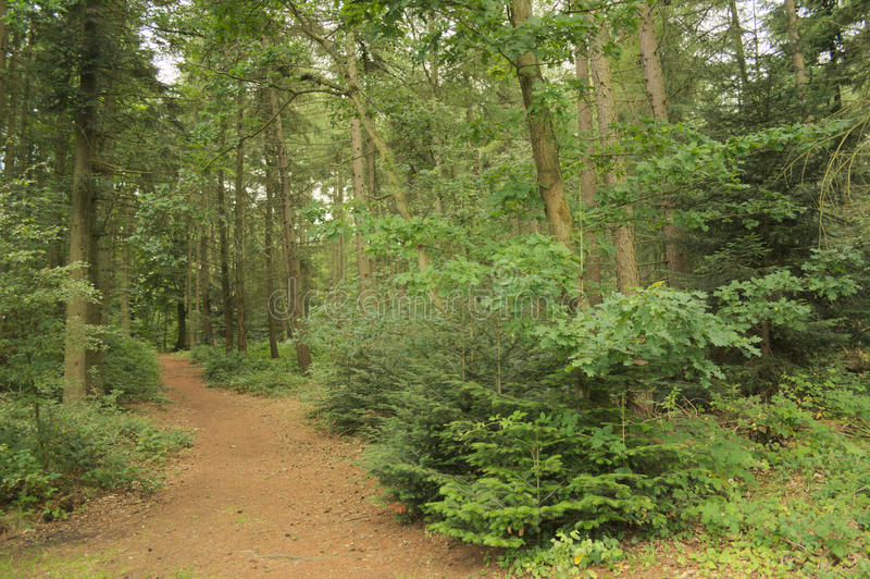 Forest path in nature stock image
