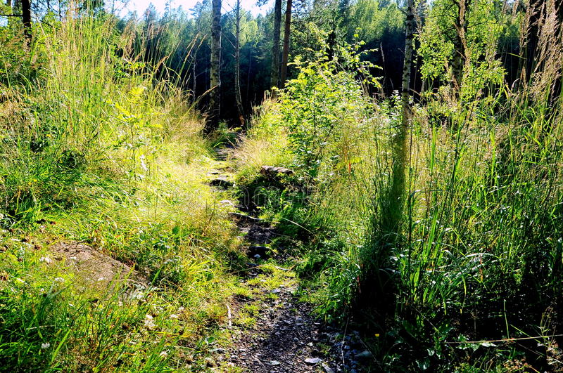 Forest path near Oslo, Norway stock photos