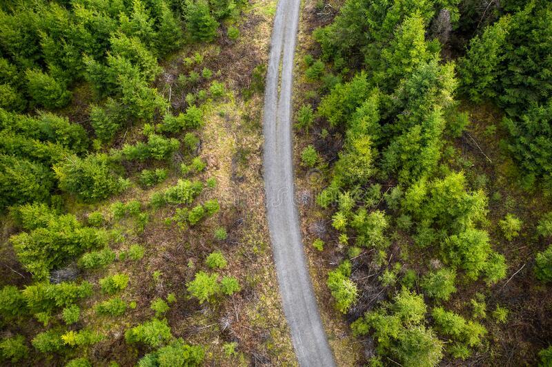 Forest path in a needle forest from above. A forest path in a needle forest from above stock photo