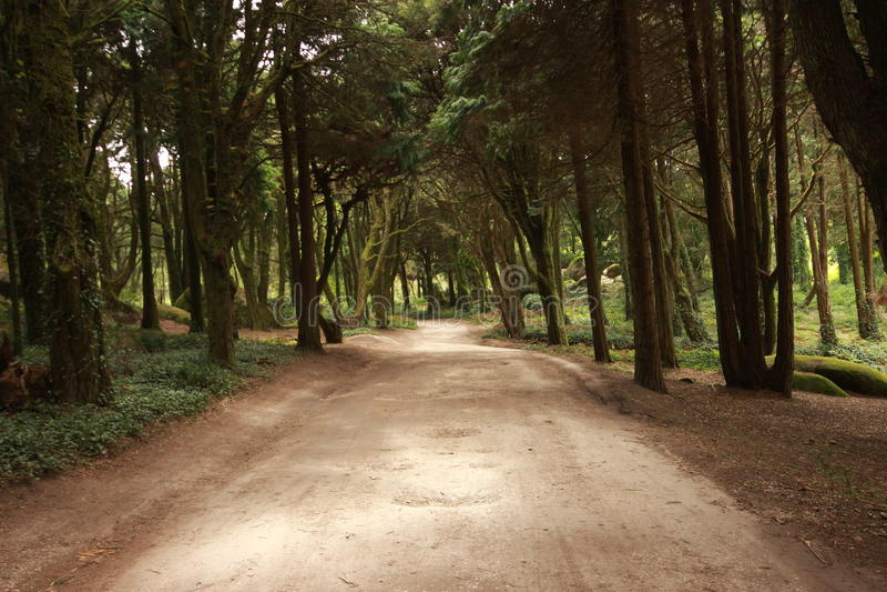 Forest Path Panorama fotografie stock libere da diritti