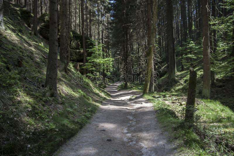 Forest path with rock in Bohemian Switzerland. Forest path with a rock in Bohemian Switzerland, we can find this place near the town Hřensko and Divoké royalty free stock image