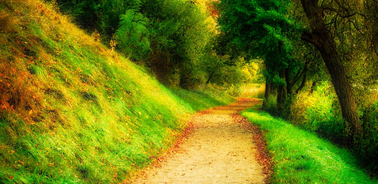 Forest path, scenic nature landscape stock image