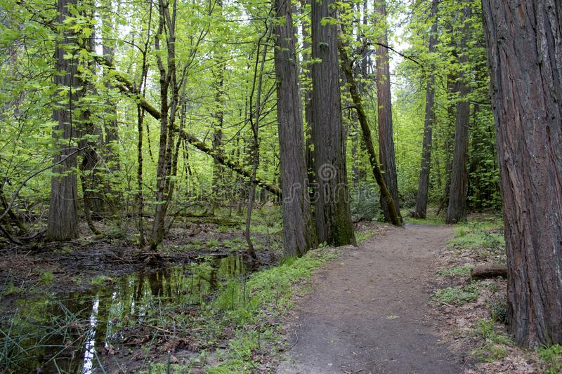 Forest Path on a spring day. stock photo