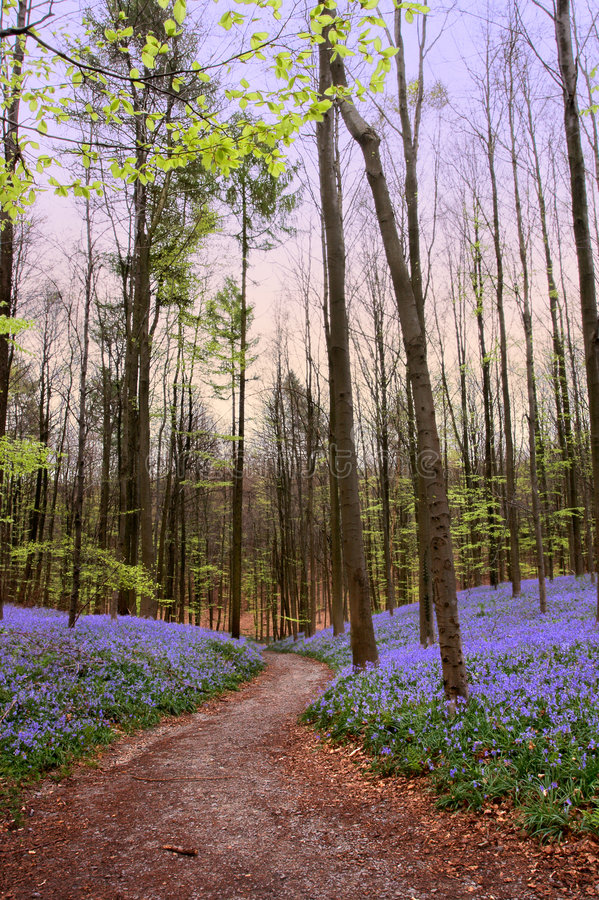 Forest path in springtime royalty free stock photography