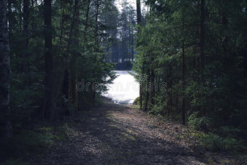 Forest path to the lake. Path through the woods leading down to a frozen lake. Early spring royalty free stock photography