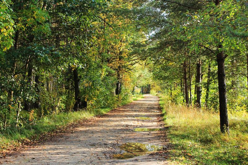 Forest path under withering trees. Autumn landscape. Forest path under withering trees. Green and yellow trees royalty free stock images
