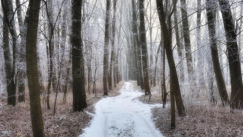 Frosty forest path in the winter royalty free stock photography
