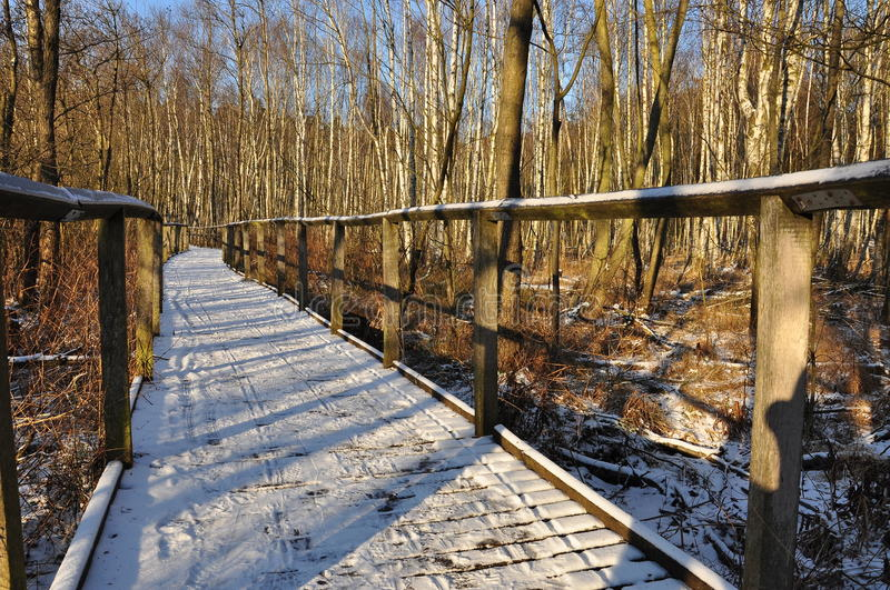 Forest path in Winter royalty free stock photo
