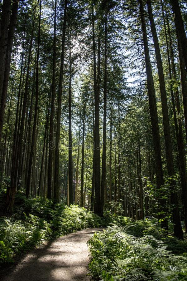 Forest, Path, Woodland, Nature stock image