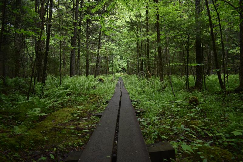Forest, Path, Woodland, Nature stock photo