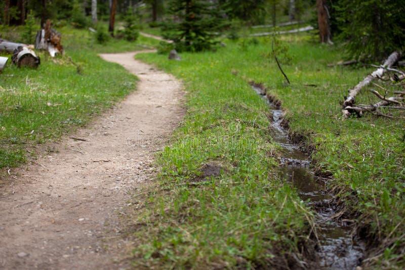 Forest Path y pequeña corriente en Rocky Mountain National Park fotografía de archivo