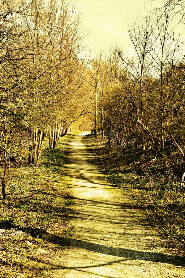 Forest path in yellow hues royalty free stock images