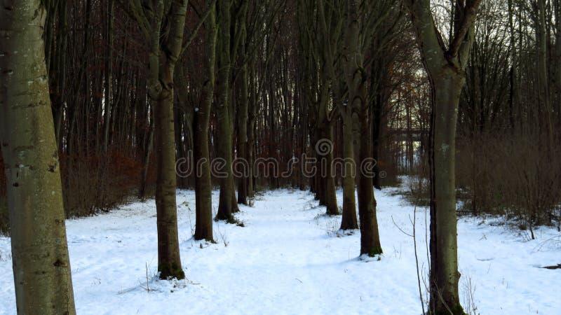 Forest Pathway Covered i snö under vinter royaltyfri fotografi