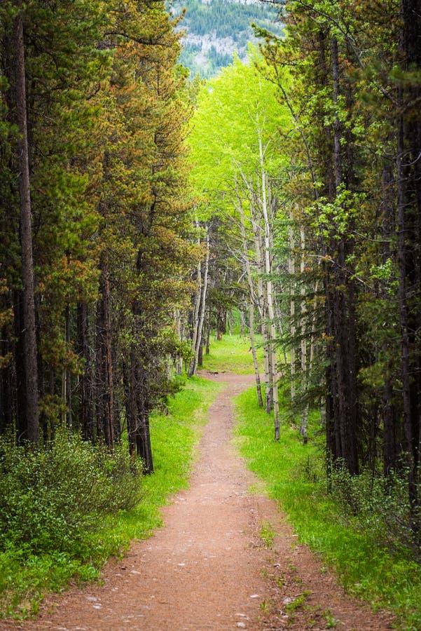 Forest Pathway i sommaren royaltyfria bilder