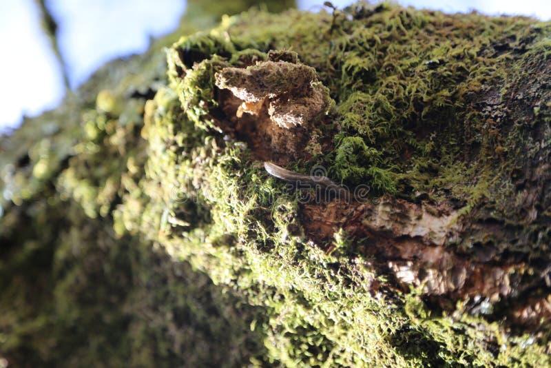 Forest Pathway - mossa och vaggar detaljen fotografering för bildbyråer