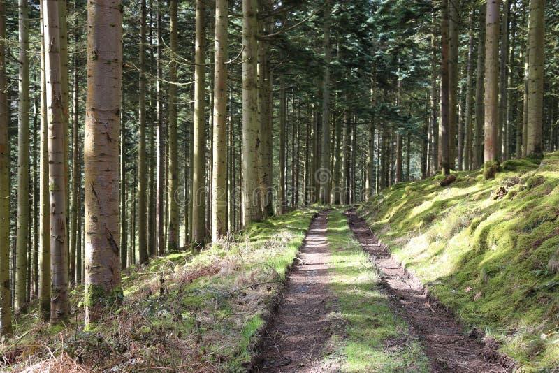 Forest Pathway - skogsbevuxen slinga royaltyfri bild
