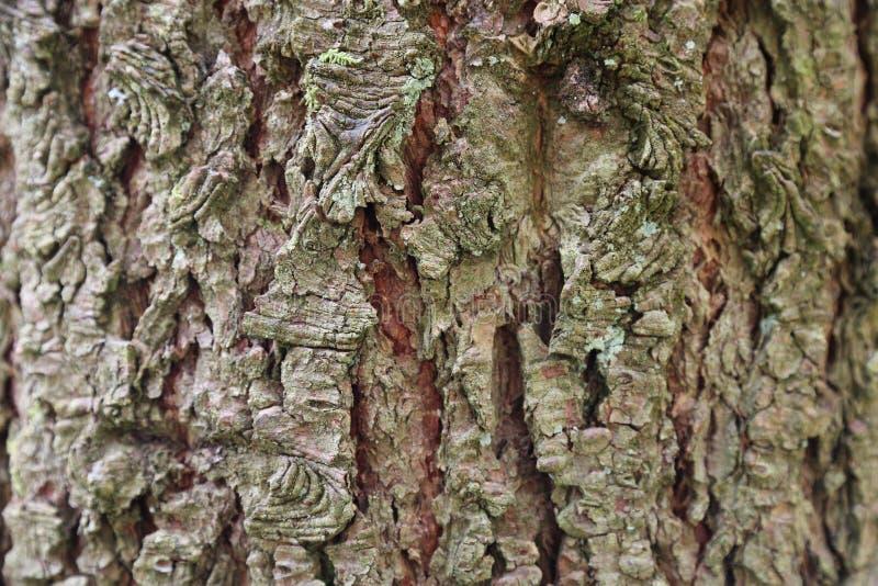 Forest Pathway - trädskäll arkivfoton