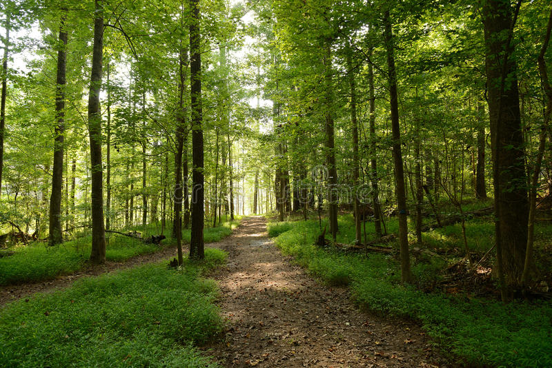 Forest Pathways royalty free stock images