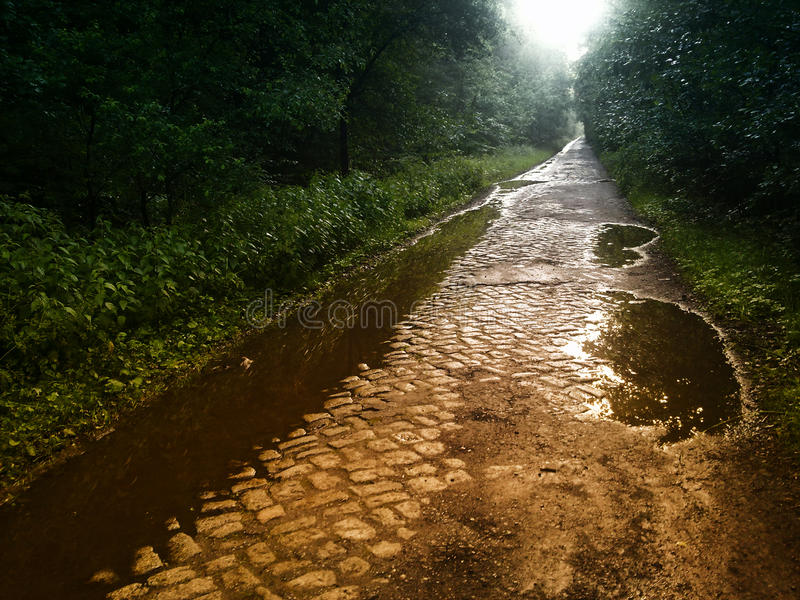 Forest paved path. A paved path in a forest after the rain stock images