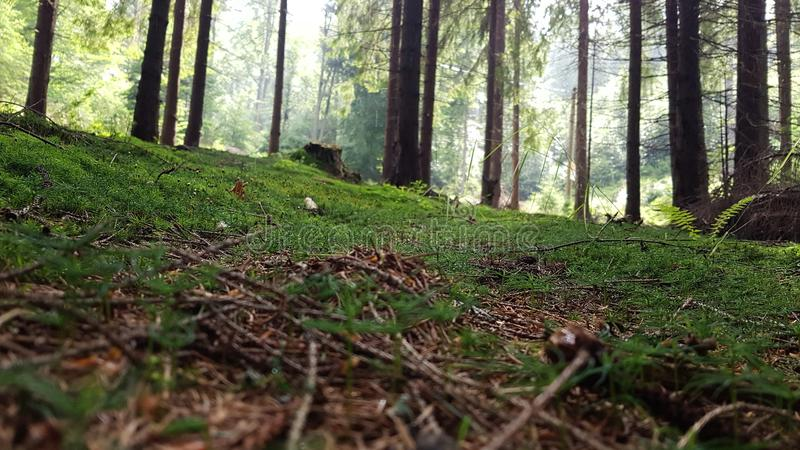 Forest photography stock photos