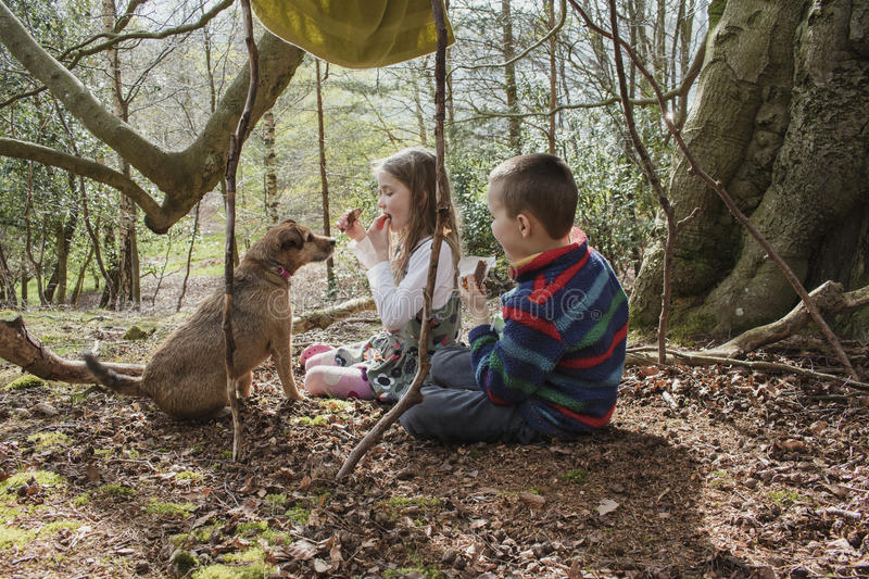 Forest Picnic With Greedy Dog imagem de stock