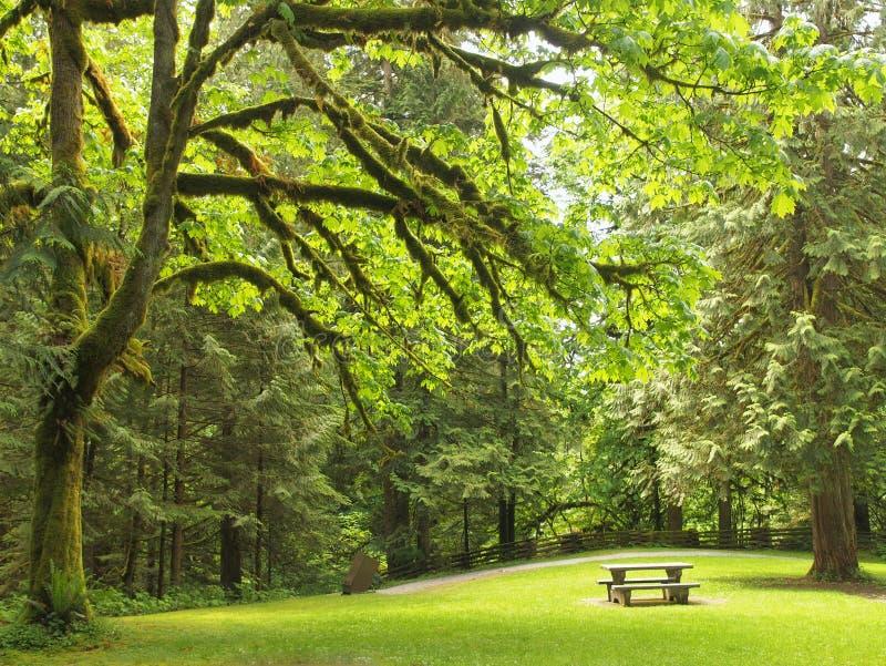 Forest picnic spot