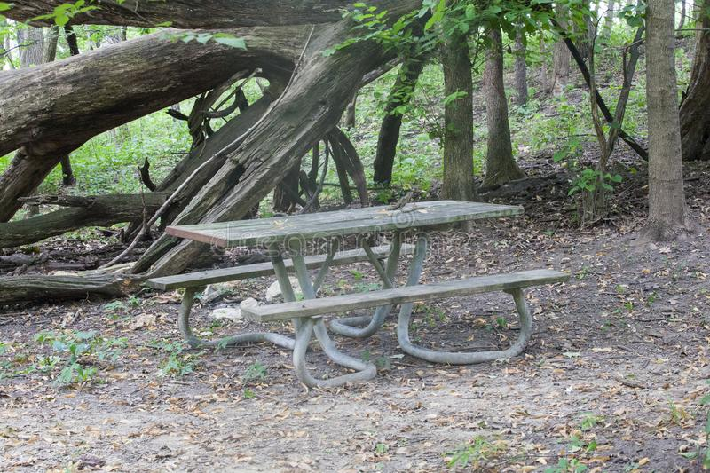 Forest Picnic Table rustique photo stock