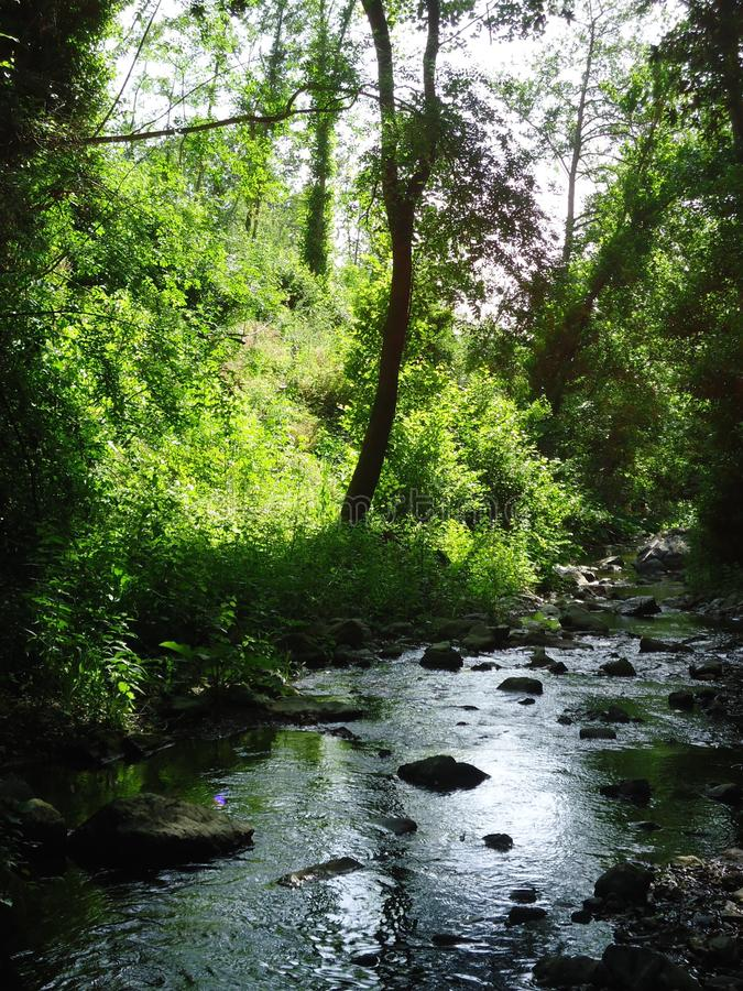 This forest is a place to be. This forest is in Fosdinovo in Italy. There are beautiful green trees plants. The sunlights and daylight. The insects and little royalty free stock photography