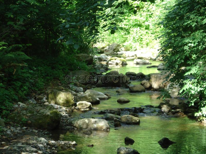 This forest is a place to be. This forest is in Fosdinovo in Italy. There are beautiful green trees plants. The sunlights and daylight. The insects and little royalty free stock images