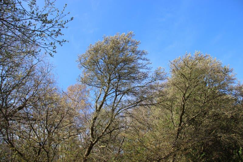 Forest Plants Budding Young Green lascia in primavera fotografia stock