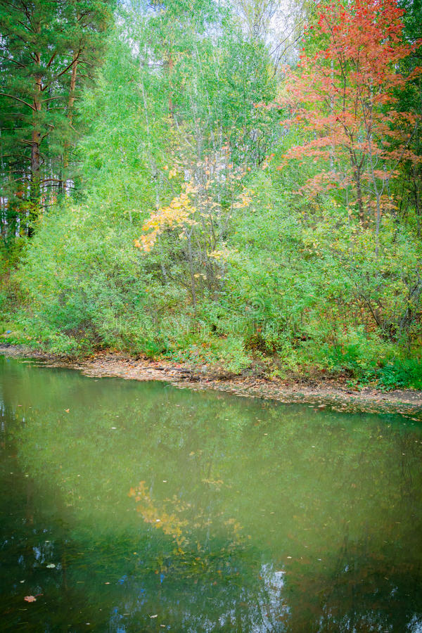 Forest pond royalty free stock photography