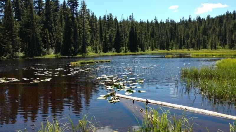 Forest Pond mit Lilypads stockbild